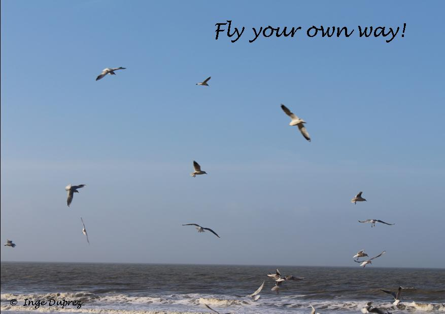 fly your own way